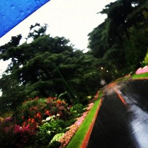 a rainy walk to work